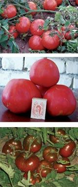 Дачницы любительское фото фото 322-370